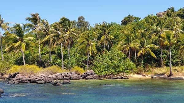 Kokospalmen-auf-Phu-Quoc